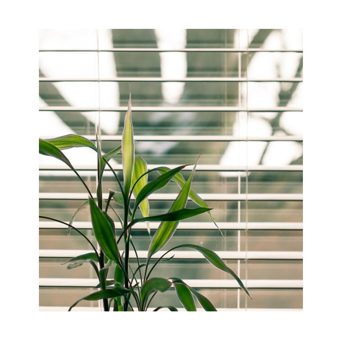 venetian blinds in home office behind indoor plant