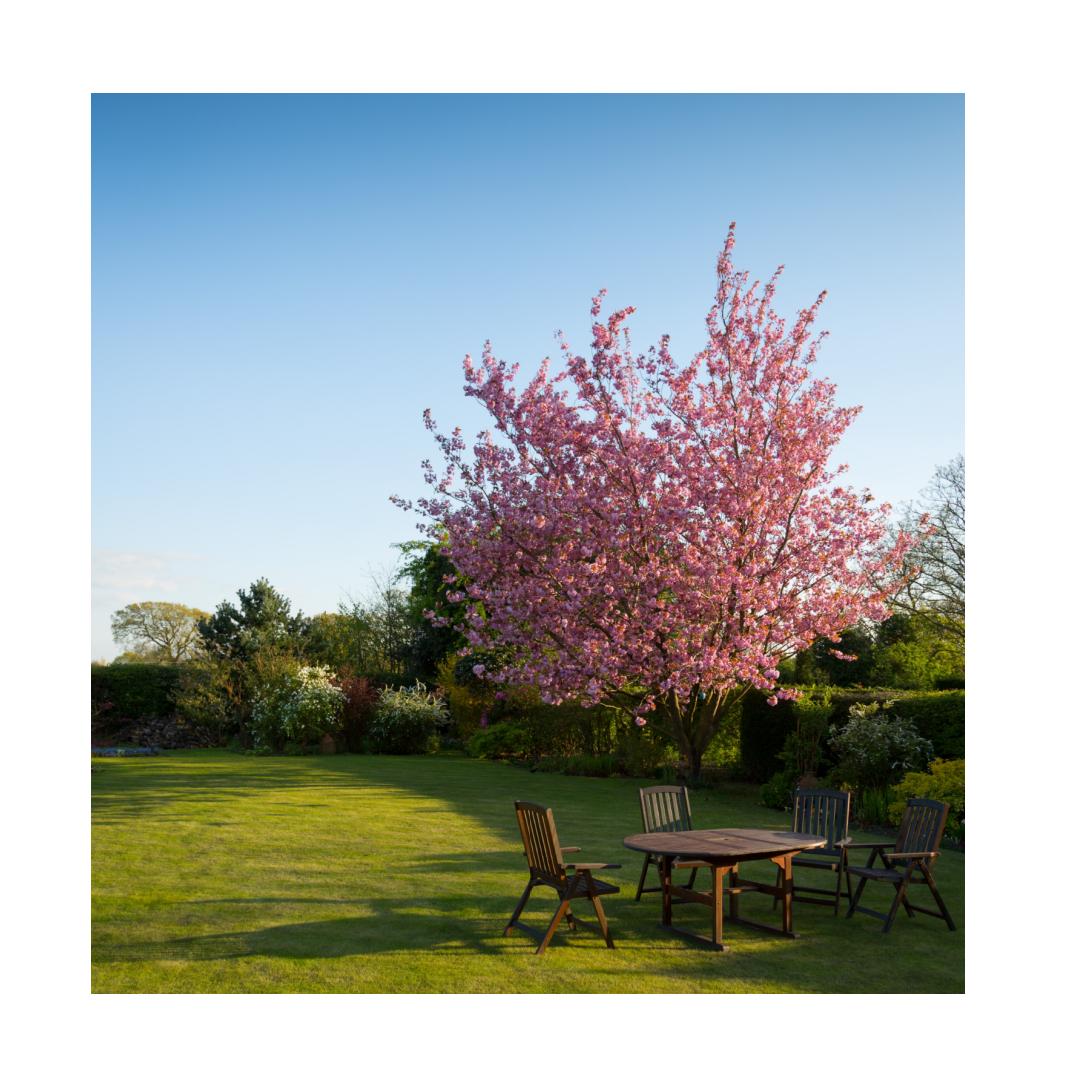 Summer garden back to outdoor living trend